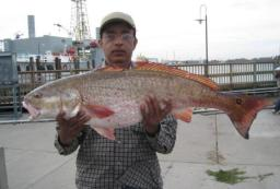 Red Fish