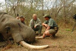 Elephant Hunt India
